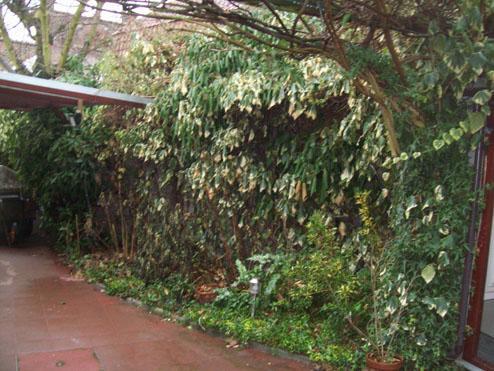Avant -  petit coin de verdure dans une cour  5m² Mouscron